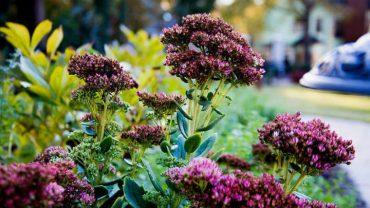 Bahçe Dekorasyonu Örnekleri ve Önerileri